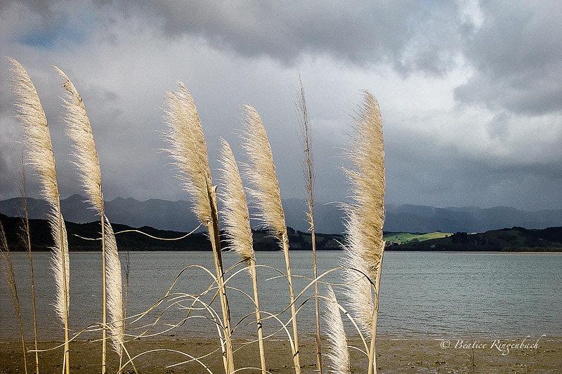 Nouvelle Zélande 1589240804