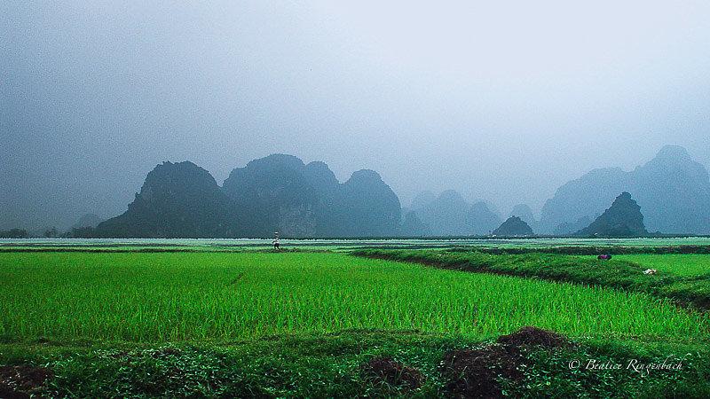Vietnam 53360205