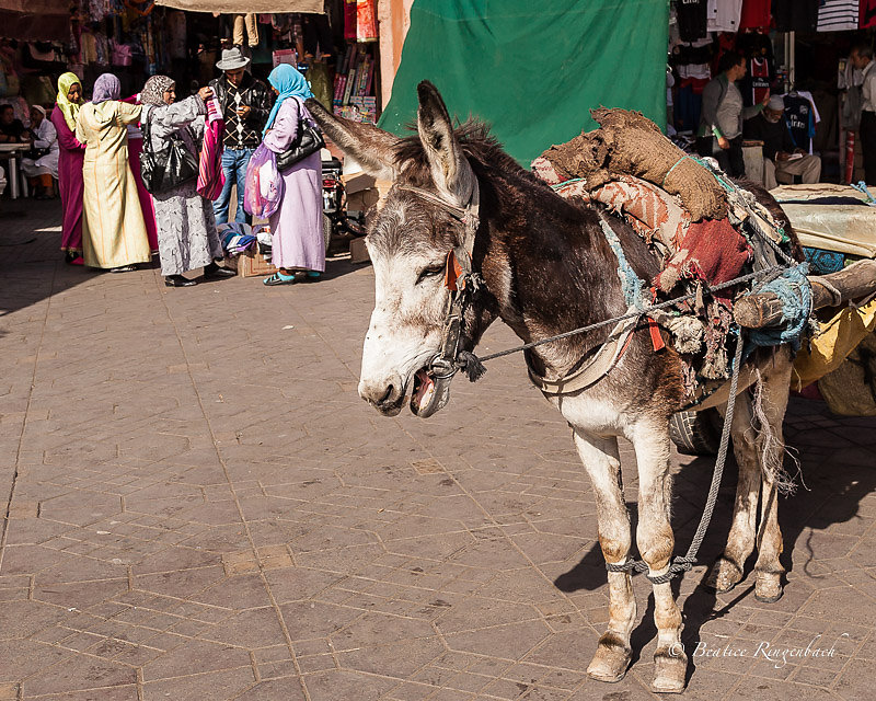Maroc 0919