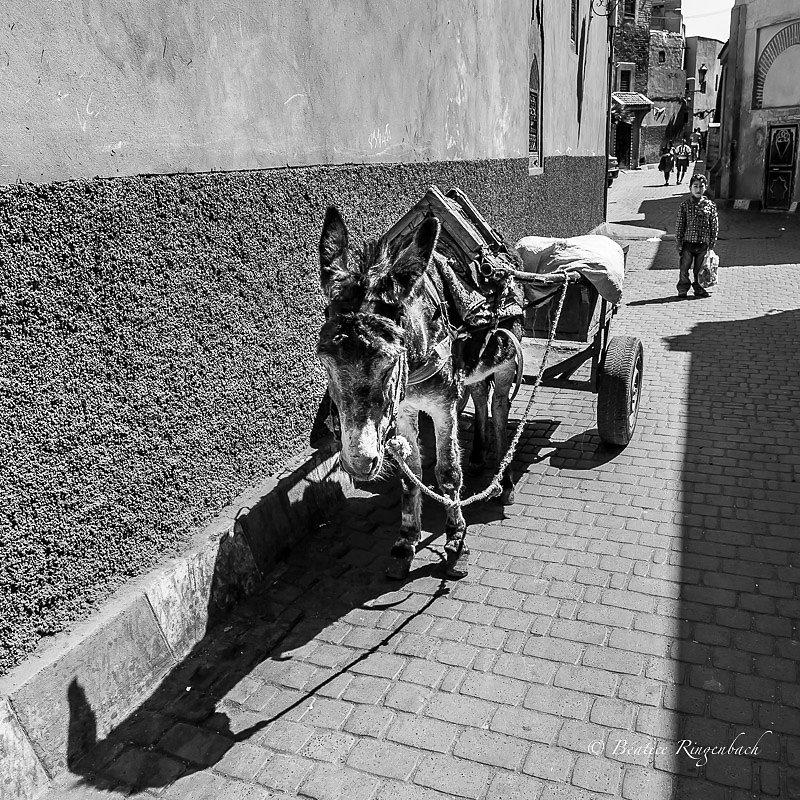 Maroc 1141