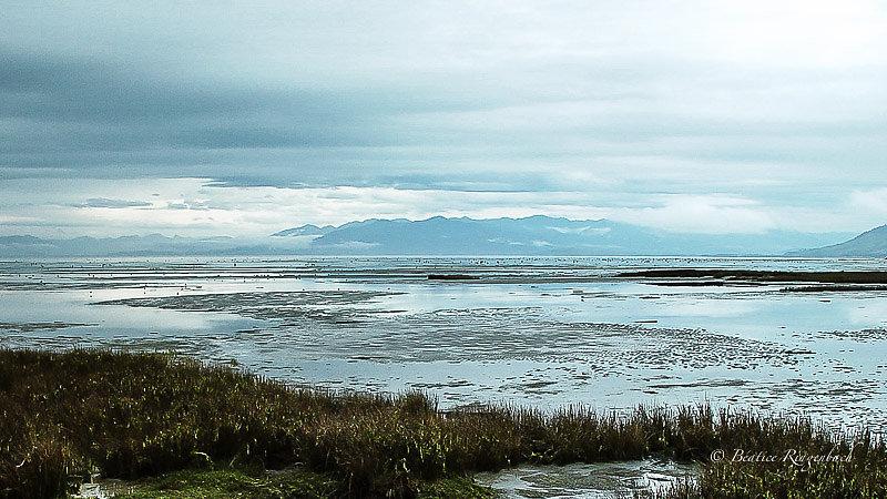Nouvelle Zélande 6960110204