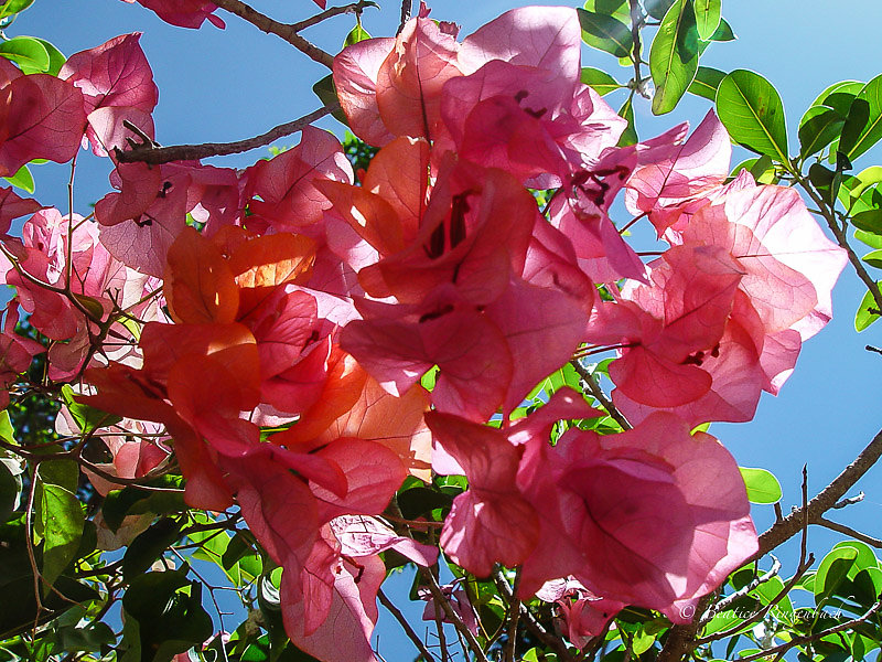 Nouvelle Calédonie 2010110904