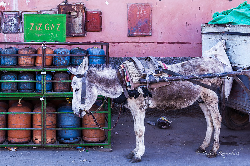 Maroc 0782